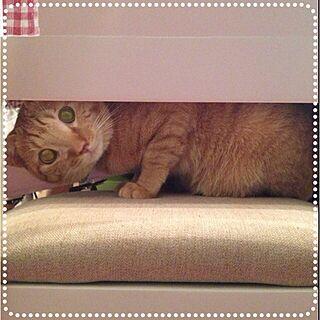 部屋全体/cat/ねこ/ライちう₍˄ ·͈ˬ̇·͈˄₎のインテリア実例 - 2013-02-21 19:46:59