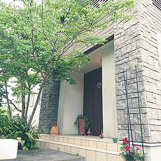 アプローチ/バラ/やまぼうしの木/落葉樹のインテリア実例 - 2019-05-08 17:24:59