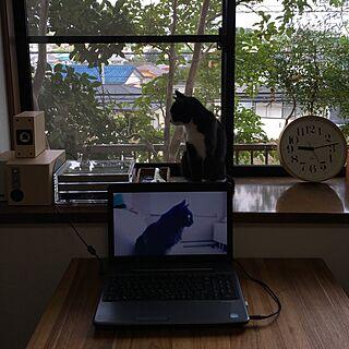 リビング/ナチュラル/出窓/引っ越したばかり/スローライフ...などのインテリア実例 - 2016-09-07 09:15:15