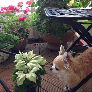 女性家族暮らし3LDK、緑と花と暮らすに関するsaraminさんの実例写真