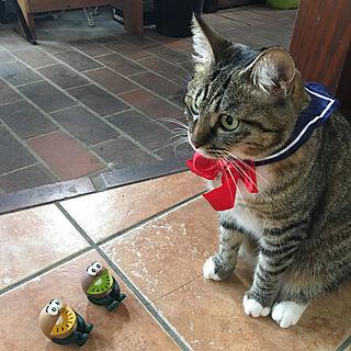 にゃんコレ/セーラー服/保護猫/猫バカ/猫好き...などのインテリア実例 - 2019-09-11 12:03:09