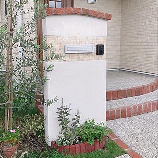 玄関/入り口/ナチュラルガーデン/門柱前の花壇DIY/門柱/オリーブの木...などのインテリア実例 - 2017-09-23 12:43:00