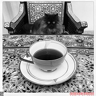 机/My Cat Mowgli/coffee/cupのインテリア実例 - 2015-02-08 12:27:35
