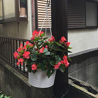 リビング/頂いたお花/植物/せまいおうち/いいねと、フォローの押し逃げすみません!...などのインテリア実例 - 2017-07-01 10:44:15