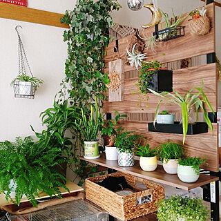 ベッド周り/観葉植物/植物のある生活/植物が好き/植物のある暮らし...などのインテリア実例 - 2020-01-30 13:53:37