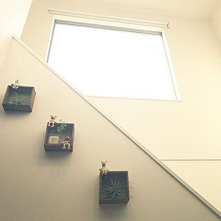 壁/天井/北側窓/ワイヤープランツ/セリア/観葉植物...などのインテリア実例 - 2018-06-24 17:19:37