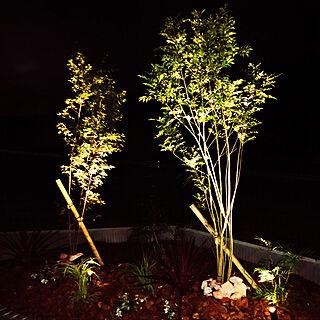 ライトアップ/夜はこんな感じ/DIY/ピンコロ石/マホニアコンフューサ...などのインテリア実例 - 2020-07-12 21:06:10