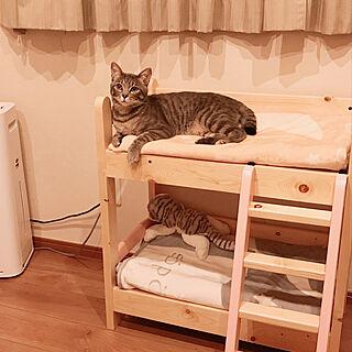 衝動買い/ひとめぼれ/猫ベッド/可愛い♡/ねこのいる日常...などのインテリア実例 - 2021-02-07 10:02:52