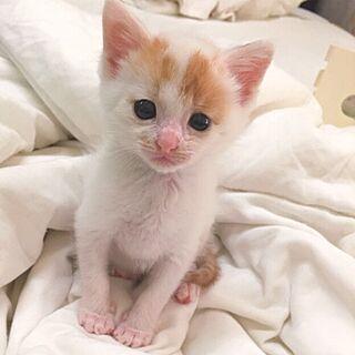 NO CAT NO LIFEの人気の写真(RoomNo.915927)