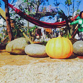 ハロウィン/かぼちゃ/ハンモック/お散歩/しかもうちじゃないですが、、...などのインテリア実例 - 2014-10-28 17:06:33