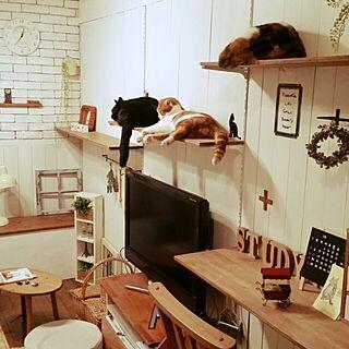 リビング/ねこ部/キャットウォークDIY/棚DIY/板壁DIY...などのインテリア実例 - 2014-11-03 00:42:56