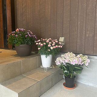 花のある暮らし/生活感のある家/狭小住宅/スキップフロアのある家/畳のある暮らし...などのインテリア実例 - 2021-05-05 16:57:43