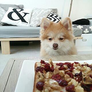 犬の人気の写真(RoomNo.2810974)