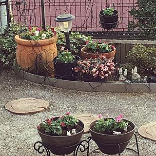 玄関/入り口/ウサギのオブジェ/パンジーとビオラ/お花に癒されます♡/お花のある暮らし...などのインテリア実例 - 2017-11-12 16:51:49