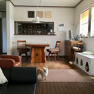 家族暮らし、ペットと暮らすに関するsplush1219さんの実例写真