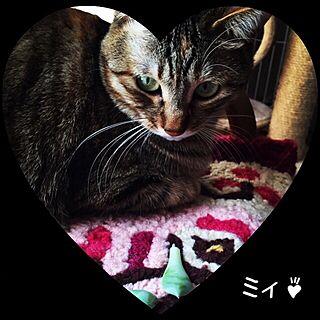 ベッド周り/いいね♪いつもありがとうございます❤️/むぎわら猫のミィ♪/ねこ部/多肉植物...などのインテリア実例 - 2016-03-02 22:24:32
