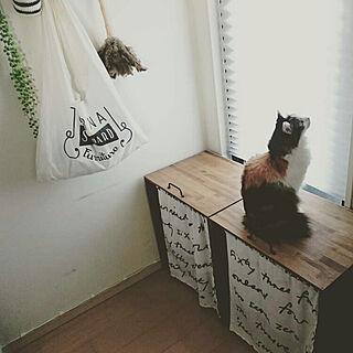 女性家族暮らし2LDK、猫バスに関するsumosarozaさんの実例写真
