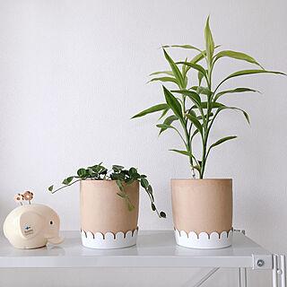 エレファントバンク/無印良品/IKEA/ペペロミアアングラータ/観葉植物のインテリア実例 - 2019-06-12 18:48:37