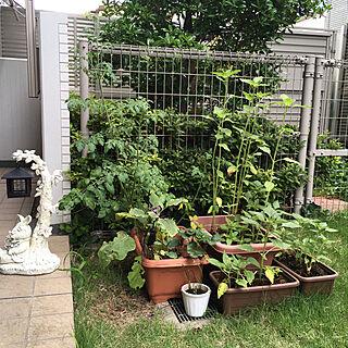 庭/マンション/こどもと暮らす。/ガーデン/ジフィー...などのインテリア実例 - 2019-06-07 08:40:20