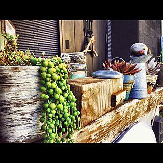 玄関/入り口/グリーンネックレス/多肉寄せ植え/多肉植物/リメイク鉢...などのインテリア実例 - 2016-10-16 20:54:09