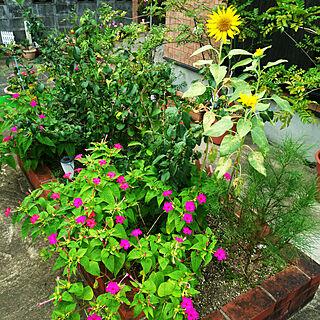 女性家族暮らし4DK、お花に関するTirorinさんの実例写真