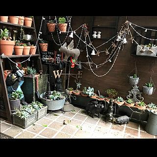 女性47歳の家族暮らし4LDK、DIY 棚 植物に関するbutachanさんの実例写真