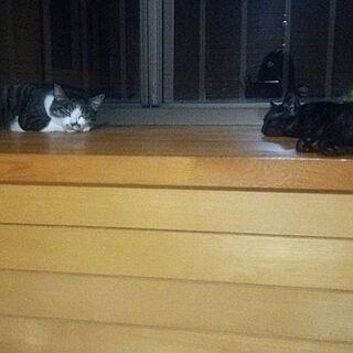 ベッド周り/黒猫 凛々/ねこのいる日常/ギジシロ かりんとうのインテリア実例 - 2017-07-30 23:09:52