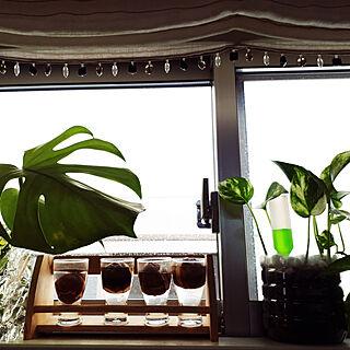女性33歳の家族暮らし4LDK、窓辺のグリーンに関するmakino1105さんの実例写真