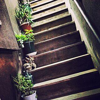 玄関/入り口/サボテン/階段/レトロ/昭和レトロ...などのインテリア実例 - 2015-06-29 00:48:00