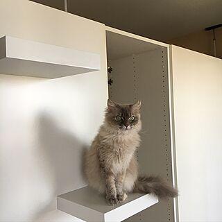 リビング/ネコとインテリア/ネコと暮らす/IKEAの棚/キャットタワーDIY...などのインテリア実例 - 2017-06-08 15:49:03