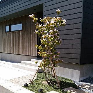 女性35歳の家族暮らし4LDK、杉板に関するyukiさんの実例写真