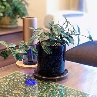 植物成長中/春よ来い〜早く来い〜/植物のある暮らし/ペペロミア/加湿器もインテリアに...などのインテリア実例 - 2021-01-27 09:48:39
