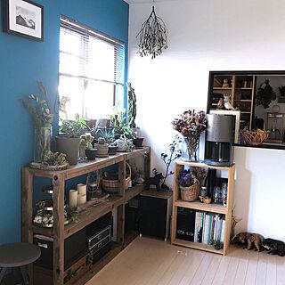 IKEA/片付けやすい/カフェ風/植物のある暮らし/花のある暮らし...などのインテリア実例 - 2020-02-28 20:08:29