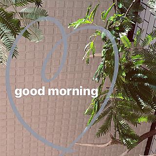壁/天井/グリーンのある生活/観葉植物/NO GREEN NO LIFE/観葉植物のある部屋...などのインテリア実例 - 2018-01-17 10:43:43