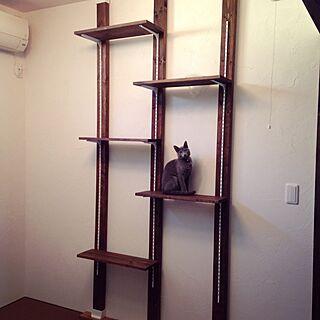 女性家族暮らし、猫初心者に関するcapelさんの実例写真