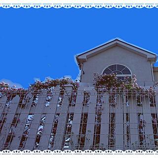 部屋全体/ホワイトインテリア/ホワイトインテリアに憧れて♡/バラを這わす/ばら...などのインテリア実例 - 2018-05-11 08:58:27