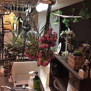キッチン/キッチンは、花だらけ/花バカ女です!/早くエアープランツ水やらないと!/散らかってると落ち着く女...などのインテリア実例 - 2017-03-20 02:00:41