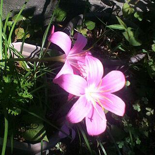 、名前わからない植物に関するKEIさんの実例写真
