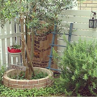 、ローズマリーツリーに関するka7konakaさんの実例写真