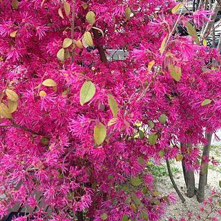 玄関/入り口/草木のインテリア実例 - 2013-04-10 17:57:28
