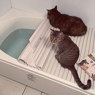 猫の人気の写真(RoomNo.3099121)