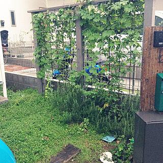 女性家族暮らし3LDK、緑のカーテンに関する98163さんの実例写真