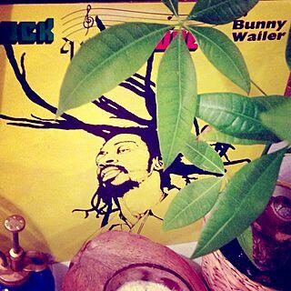植物/レコード/ふたりジャマイカ部のインテリア実例 - 2013-12-01 19:40:49