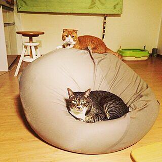 女性22歳の家族暮らし、猫もダメにするソファに関するtajm93さんの実例写真