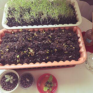 食べられない植物の人気の写真(RoomNo.2439245)