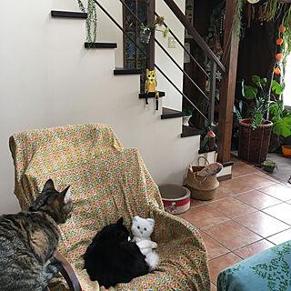 癒しの空間/猫が好き/保護猫/猫バカ/ねこと暮らす。...などのインテリア実例 - 2019-10-27 11:11:55