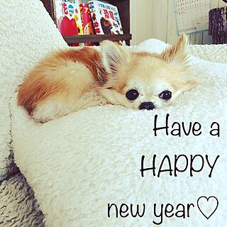 ベッド周り/戌年♡/来年もよろしくお願いします♡/今年もお世話になりました♡のインテリア実例 - 2018-12-31 14:36:10