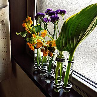 壁/天井/趣味/花のある暮らし/花のある生活/DULTON...などのインテリア実例 - 2021-05-09 08:44:47
