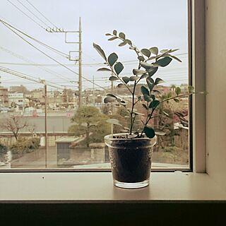 、カウンター窓に関するさんの実例写真
