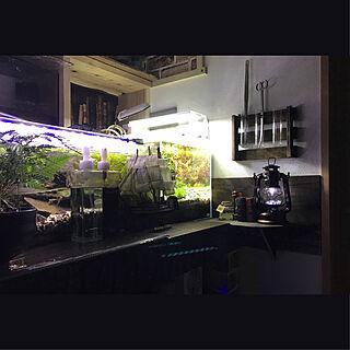 男性32歳の家族暮らし、夜の水槽に関するkouta_Co.さんの実例写真